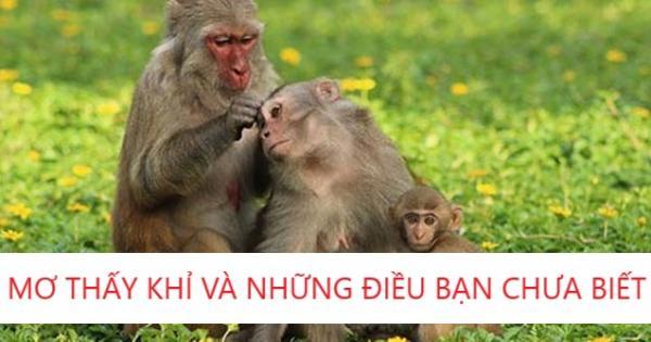 Những Điều Bạn Chưa Biết Về Giấc Mơ Thấy Khỉ